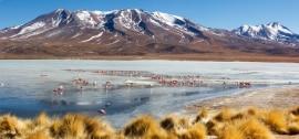 Flamingos,  Altiplano, Bolivia